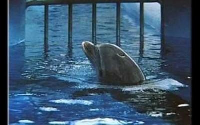 La captivité des animaux
